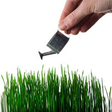 Hand watering grass with a tiny watering can