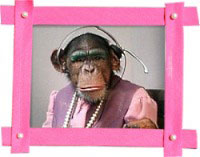 Dressed-up monkey in a picture frame